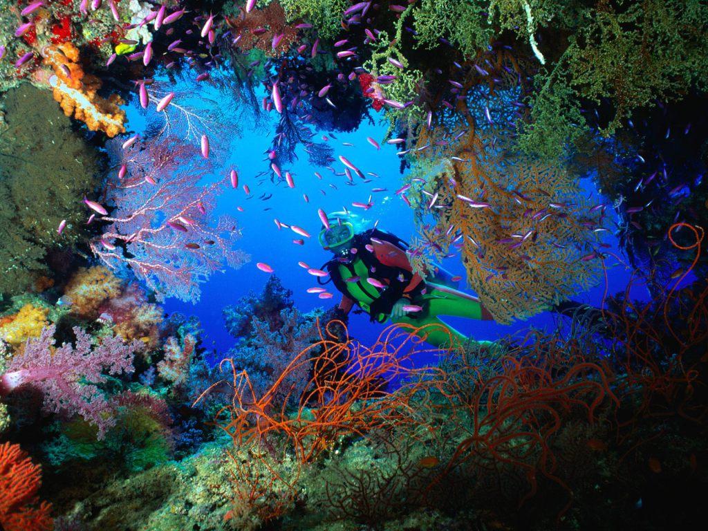 Logística para un viaje de submarinismo a México