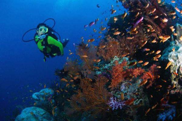arrecifes de coral veracruz